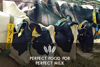 Perfect Food for Fresh Cow Milk