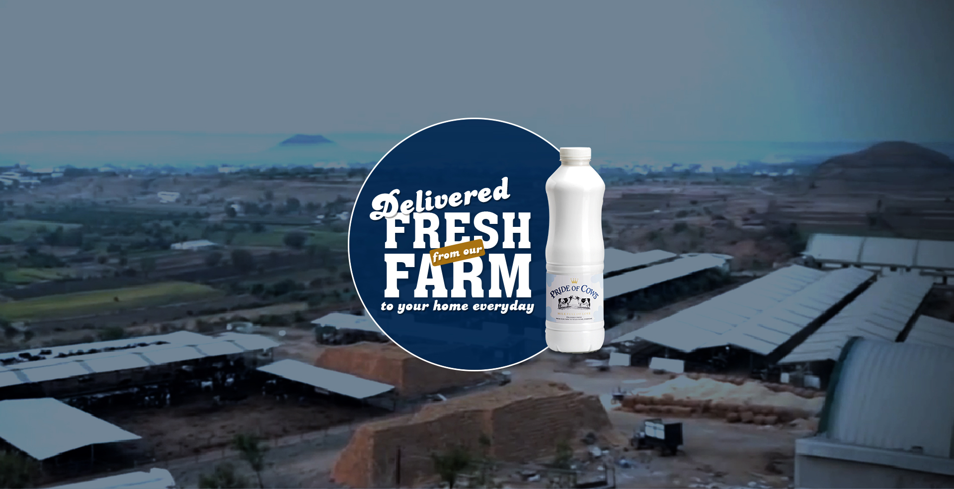 Farm to Home 100% Cow milk Manufacturer and Supplier – Pride of Cows